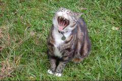 pazuzu_yawns